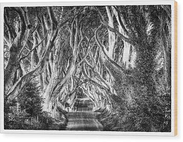 Dark Hedges Wood Print by Craig Brown