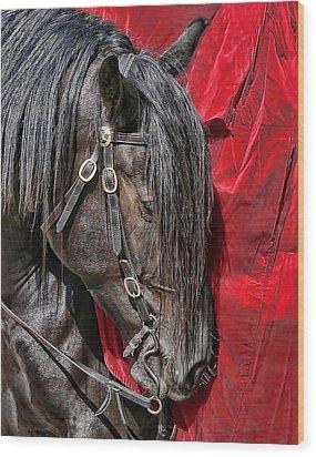 Dark Horse Against Red Dress Wood Print by Jennie Marie Schell