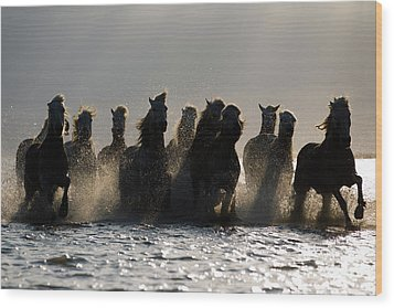 Dark Horses Wood Print by Carol Walker