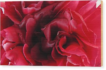 Dark Red Peony Wood Print by Sascha Kolek