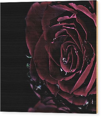 Dark Rose 2 Wood Print by Ann-Charlotte Fjaerevik