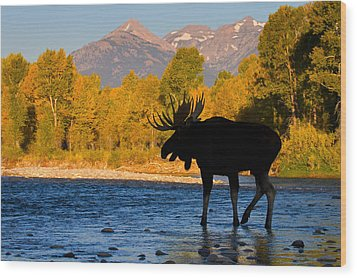 Wood Print featuring the photograph Dark Side Moose                               by Aaron Whittemore
