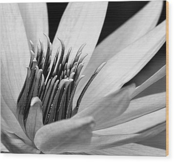 Wood Print featuring the photograph Dark Throated Beauty IIi by Dawn Currie