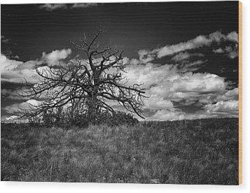 Dark Tree Wood Print by Tony Boyajian