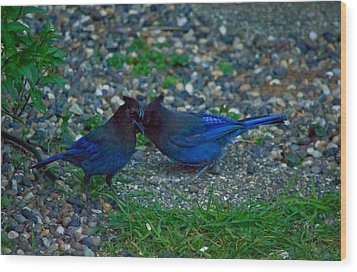 Darling I Have To Tell You A Secret-sweet Stellar Jay Couple Wood Print