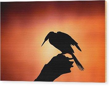 Darter Silhouette With Misty Sunrise Wood Print by Johan Swanepoel