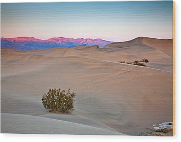 Dawn Dunes Wood Print by Peter Tellone
