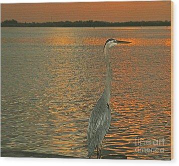 Dawn Greets A Blue Heron Wood Print by Joan McArthur