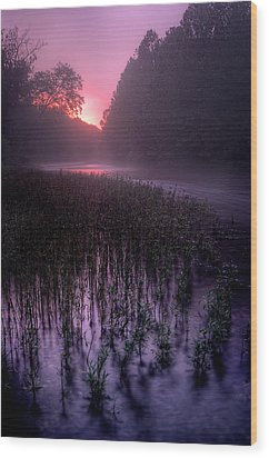 Dawn Mist Wood Print by Robert Charity