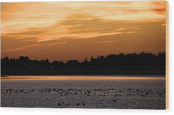 Wood Print featuring the photograph Dawn Of The Birds by Trever Miller