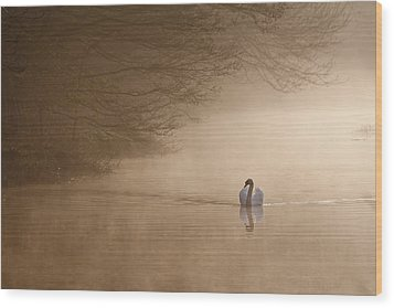 Dawn Swan Wood Print