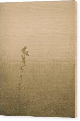 Dawning Mist Wood Print by Tim Good