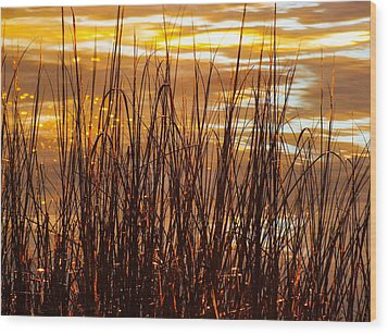 Dawn's Early Light Wood Print by Karen Wiles