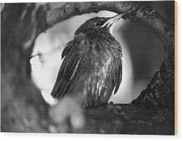 Wood Print featuring the photograph Dax's Bird by Tarey Potter