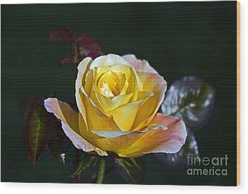 Wood Print featuring the photograph Day Breaker Rose by Kate Brown