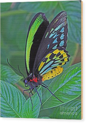 Day-glo Butterfly Wood Print by Larry Nieland