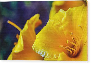 Wood Print featuring the photograph Day Lilies by Cathy Donohoue