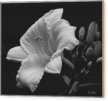Wood Print featuring the photograph One Day Lily  by James C Thomas