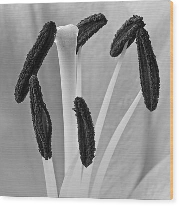 Wood Print featuring the photograph Day Lily Heart by Dawn Currie