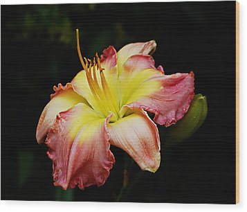 Wood Print featuring the photograph Day Lily by Linda Brown