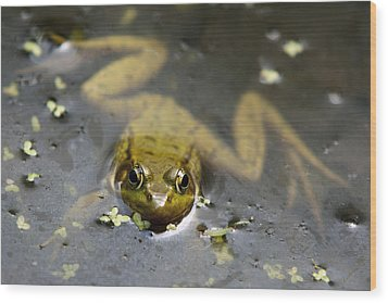 Daybreak Frog Wood Print by Christina Rollo
