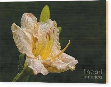 Daylily After A Morning Rain Wood Print by Madonna Martin