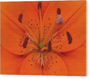 Daylily Heart Wood Print