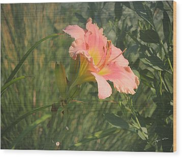 Wood Print featuring the photograph Daylily In The Sun by Jayne Wilson