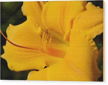 Wood Print featuring the photograph Daylily by Linda Segerson