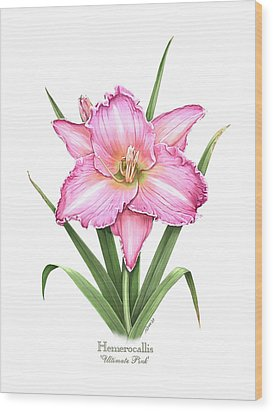 Daylily Ultimate Pink Wood Print by Artellus Artworks