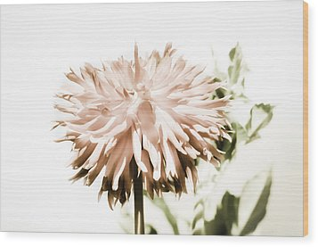 Wood Print featuring the photograph Dazzling Dahlia by Sherri Meyer