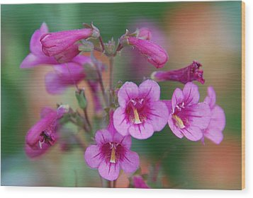 Wood Print featuring the photograph Pink Flowers by Tam Ryan