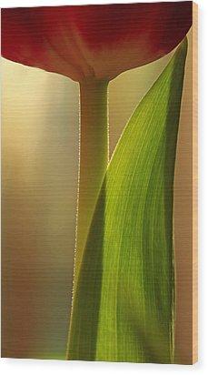 Vertical Tulip Wood Print