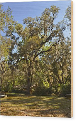 De Leon Springs - Classic Old Florida Wood Print by Christine Till