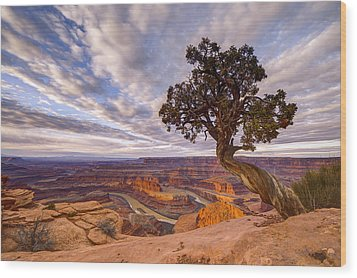 Dead Horse Point Sunrise Wood Print