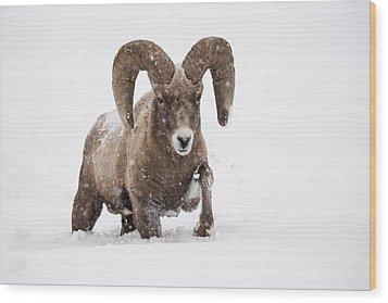 Dead Of Winter Wood Print