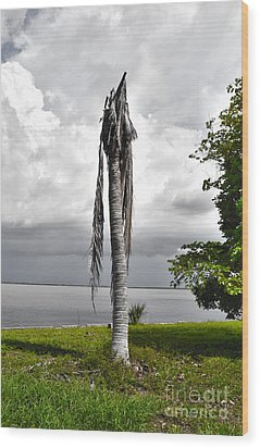 Wood Print featuring the photograph Dead Palm by Timothy Lowry