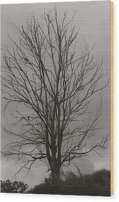 Dead Tree Wood Print by Amarildo Correa