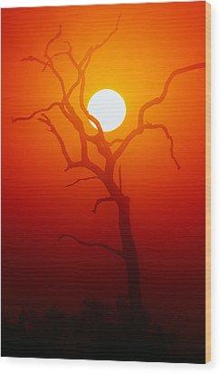 Dead Tree Silhouette And Glowing Sun Wood Print by Johan Swanepoel