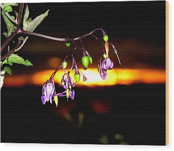 Deadly Nightshade Wood Print