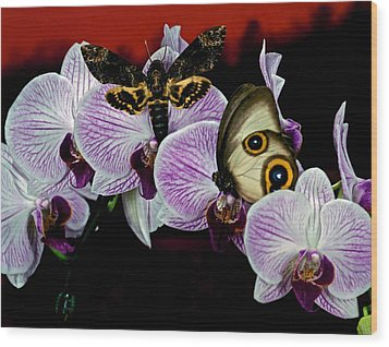 Death Heads Moth Meets Silky Owl Butterfly On Orchid Flower Wood Print by Leslie Crotty