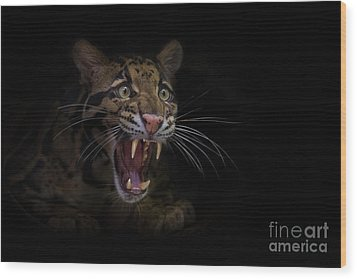 Deceptive Expressions Wood Print by Ashley Vincent
