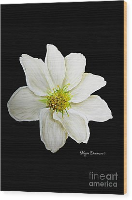 Decorative White Floral Flower Art Original Chic Painting Madart Studios Wood Print by Megan Duncanson