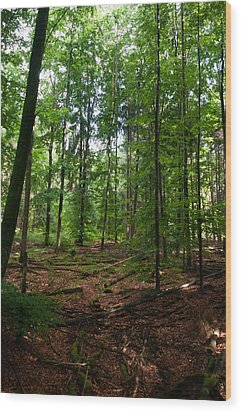Deep Forest Trails Wood Print