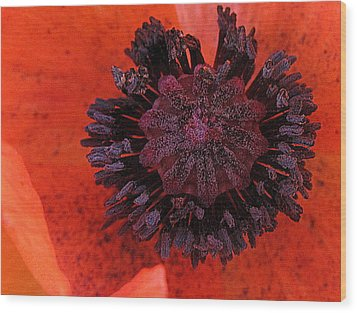 Wood Print featuring the photograph Deep In Bloom by Suzy Piatt