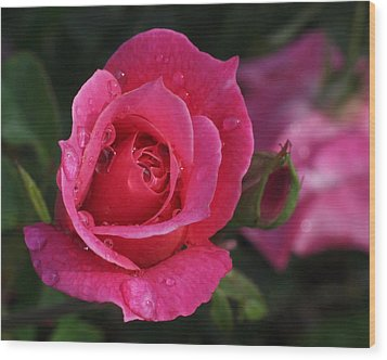 Deep Pink Beauty Wood Print by Rona Black