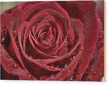 Deep Red Rose Wood Print