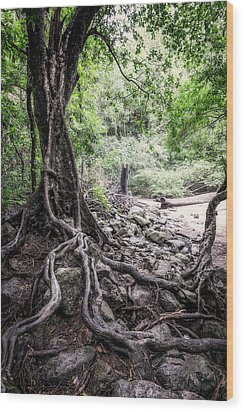Deep Rooted Wood Print by Nick  Shirghio
