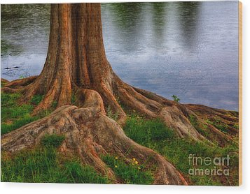 Deep Roots - Tree On North Carolina Lake Wood Print by Dan Carmichael