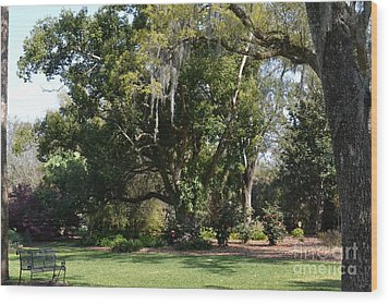 Wood Print featuring the photograph Deep South Scenery by Carol  Bradley